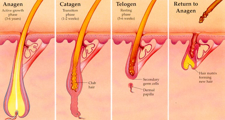 Hair removal cream for ingrown hairs