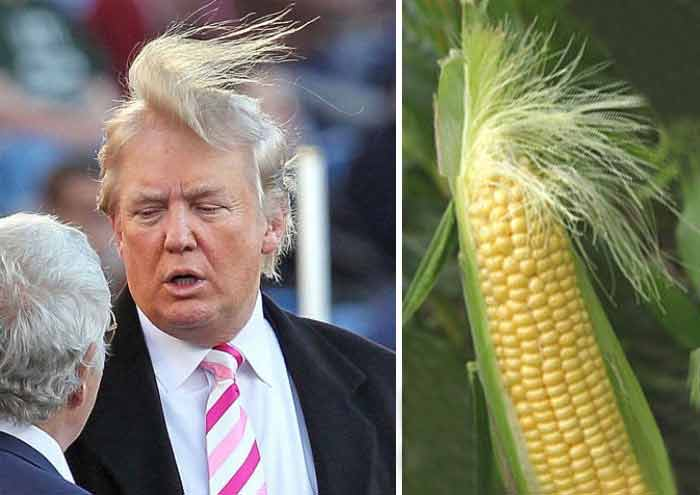 corny hairstyle donald trump